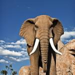 """Rock Elephant"" by photocell"