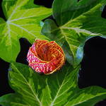 """""""Floating Flower"""" by LightHeart"""