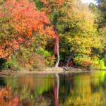 """Joyous Autumn Reflection"" by ZunildaSarete"