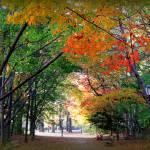 """""""Autumn Bliss"""" by ZunildaSarete"""