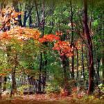 """""""Autumn Smile"""" by ZunildaSarete"""