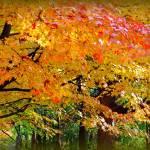 """""""Autumn Leaves"""" by ZunildaSarete"""