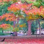 """""""The Power of Autumn"""" by ZunildaSarete"""