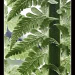 """Fern Detail"" by petemeade61"