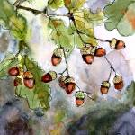 """Acorn Watercolor by Ginette Callaway"" by GinetteCallaway"