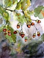 Acorn Watercolor by Ginette Callaway