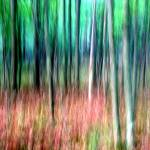 """Painted Forest"" by hockmanphotography"