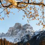 """Dolomites mountain tree branches and leaves"" by FrancescoMalpensi"