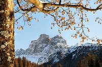 Dolomites mountain tree branches and leaves