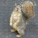 """puzzled squirrel"" by mkphotopdx"
