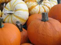mini pumpkins and gourds