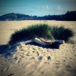 """agate beach scene"" by mkphotopdx"