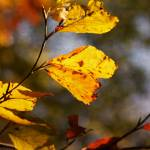 """Autumn Foliage 1"" by BrittasWorldofPhotos"