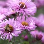 """""""Bee on a daisy 2"""" by SueLeonard"""