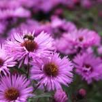 """""""Bee on a daisy"""" by SueLeonard"""