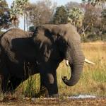 """African Elephant"" by malcolmbowling"
