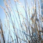 """""""Weeds"""" by billfehr"""