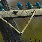 """Blue Glass Insulators"" by PaulDRobertson"