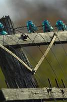 Blue Glass Insulators