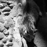 """""""Sleeping on Stepping Stones"""" by DonnaCorless"""