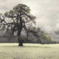 Oak Tree III Art Prints & Posters by diannepoinskiphotography