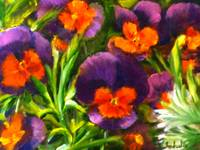 Giverny Pansies