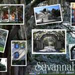 """Savannah Collage"" by Groecar"