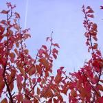 """red sticks"" by FlashyFay"