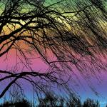"""Weeping Willow Tree Rainbow"" by PhotographsByCarolFAustin"