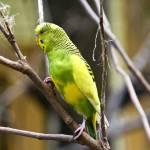 """""""Little Birdie"""" by LizRhule"""