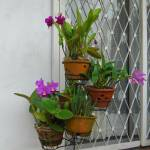 """""""Old Orchid-pot Stand"""" by gallerywaja"""