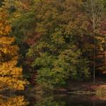 """""""Rose Lake Shore Line in October"""" by jimcrotty"""