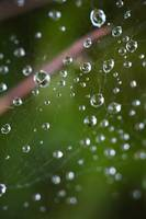 Web Droplets
