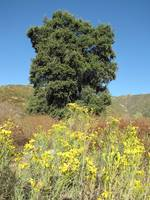 Wildwood Canyon State Park