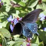 """Butterfly"" by DAJOPHOTOS"