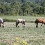 """Horses"" by DAJOPHOTOS"
