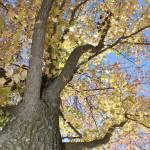"""Up a tree"" by DAJOPHOTOS"
