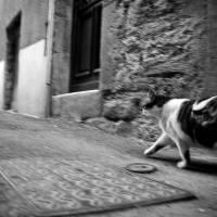 le bien chat - Millau, Cevennes 2010 Art Prints & Posters by Aleksandra Zaranska