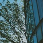 """Tree and Glass"" by anasampaio"