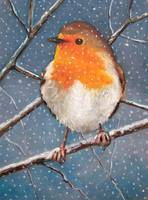 English Robin in Snow