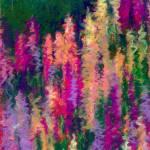"""""""Lupine Field"""" by LindaPackardArt"""