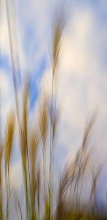 Blurred Weeds No 2