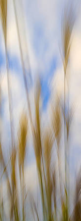 Blurred Weeds No 3