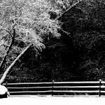 """Cedaredge Snowfall"" by JannArtPhotography"