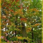"""""""In the Height of Autumn"""" by jbjoani2"""