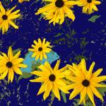"""Black Eyed Susans on Navy"" by Wendy_Ferguson"