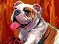 Capone English Bulldog