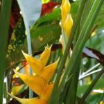 """St. Lucia Flora 02"" by auNaturale"