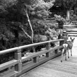 """Deer on a Japanese Bridge"" by impressionistheart"