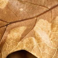 Fall Texture 3 by Jim Crotty